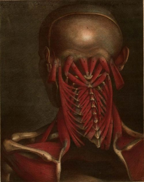 "☤ MD ☞☆☆☆ Plate from ""Essai d'Anatomie"" produced by Jacques Fabien Gautier d'Agoty in 1745 in Paris, France."