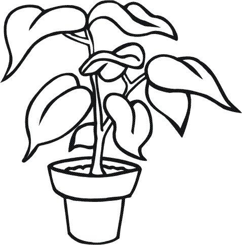 9 best plantas y flores images on pinterest | flowers, plants and