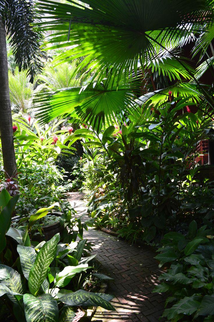 270 best Tropical Garden images on Pinterest | Tropical gardens ...