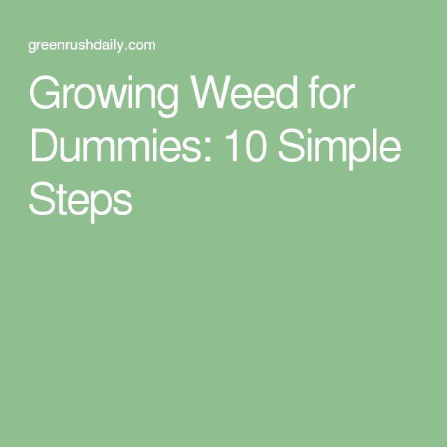 Growing Weed for Dummies: 10 Simple Steps