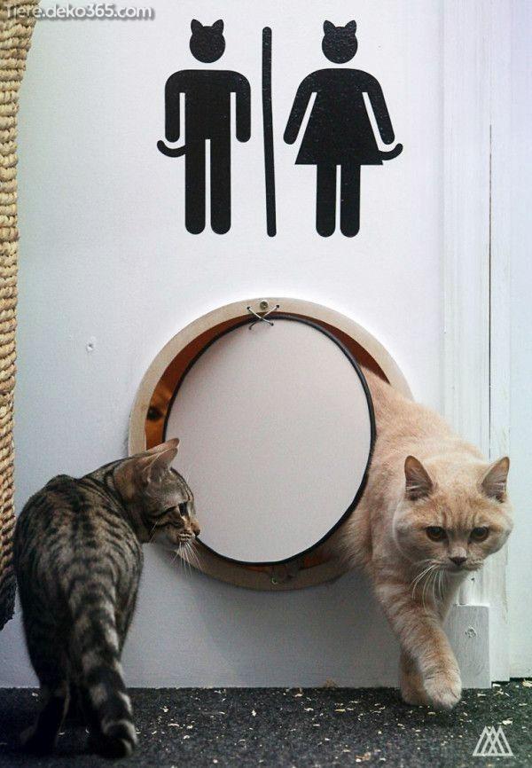Tolle Bilder und Informationen zu Cat Cafe   – Katze