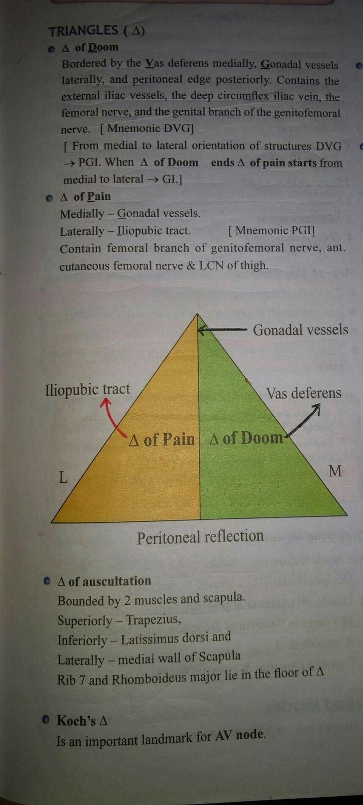 Triangle of pain anatomy