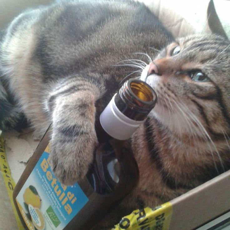 Di prima mattina ubriaco di linfa! Mah... #gatto #miciotto #colazione #sabato #depurazione