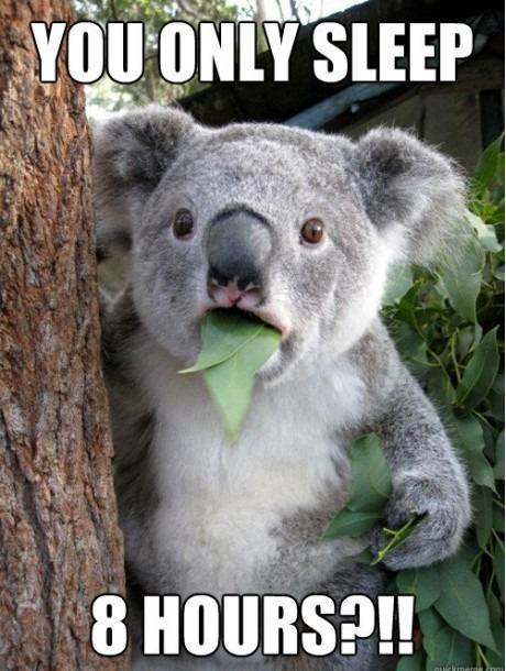 If only...: Memes,  Phascolarcto Cinereus,  Native Bears, Funny Stuff, Koala Bears, Humor,  Koalas Bears, Funny Animal,  Kangaroos Bears