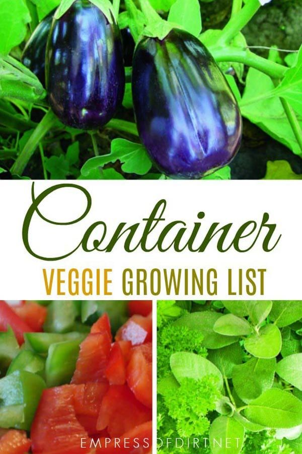 10 Best Vegetables For Containers Home Vegetable Garden