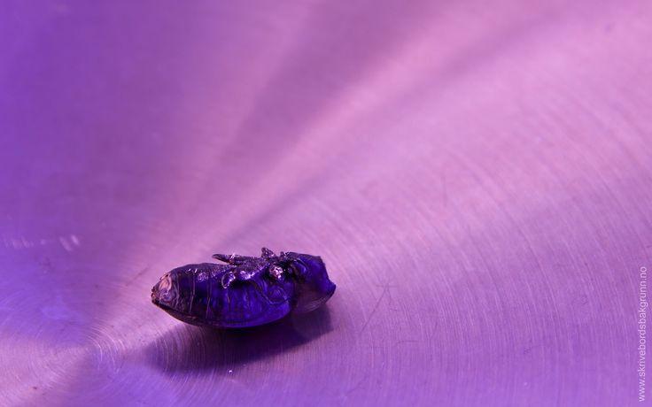 Skrivebordsbakgrunn: Tomt skall / Dead beetle on brushed steel
