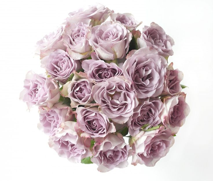Smukke roser Interior styling  beautiful roses