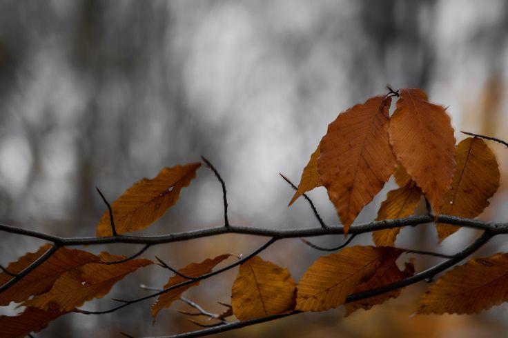 Fall... - Autumm Ottawa Ontario Canada