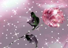 Imagenes De Amor Con Movimiento   Imagenes de amor con movimiento para celular amor para celular gratis