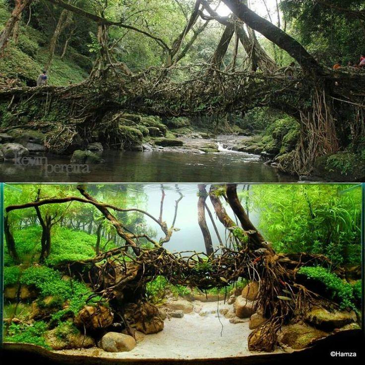 Aquascape Version Of A Living Root Bridge
