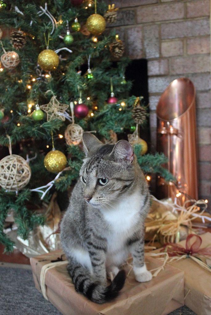 Cats LOVE Christmas