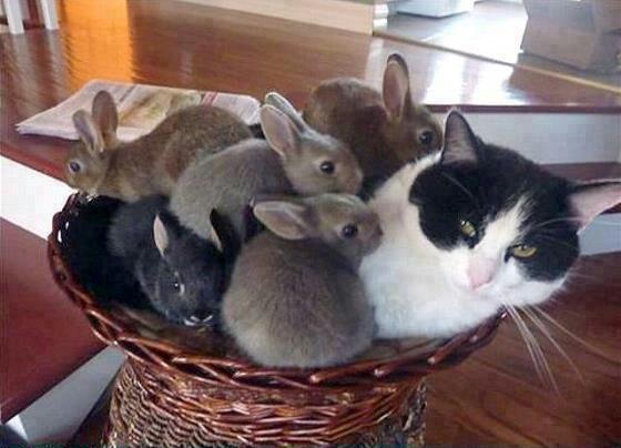 Baby bunnies + Momma cat <3