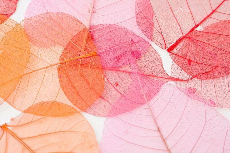 Best 25 Leaf Skeleton Ideas On Pinterest The Leaf Leaf