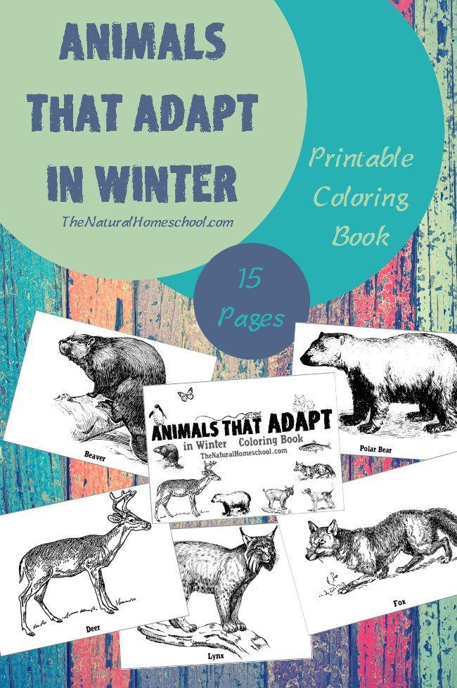 557 best Animals Activities for kids images on Pinterest
