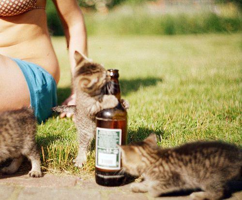cat beer bottle animal - photo #30