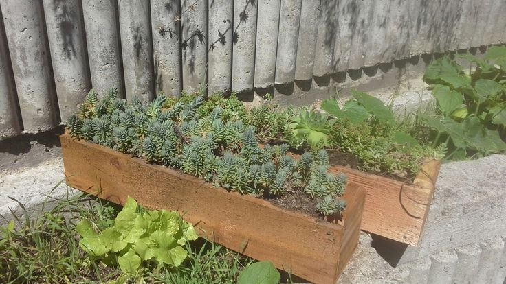 "Succulents in 19.5"" cedar window box planter."