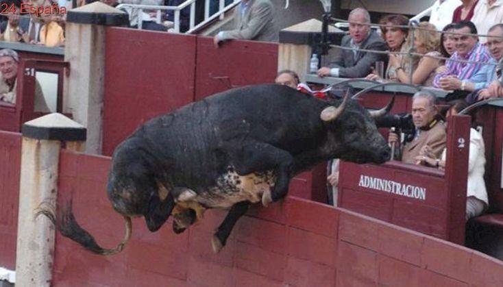 «Comisario», el toro que saltó al tendido de Barcelona y ocasionó varios heridos