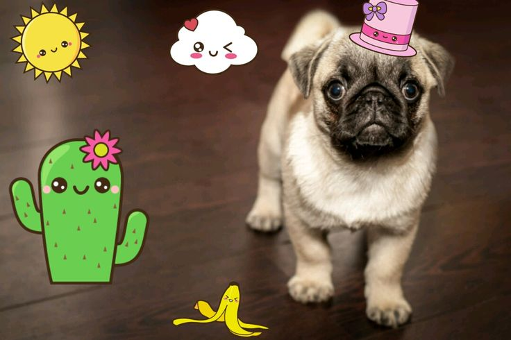 Beautifull kawaii stickers for your photos. Have fun ^^ #kawaii #photo #stickers #app