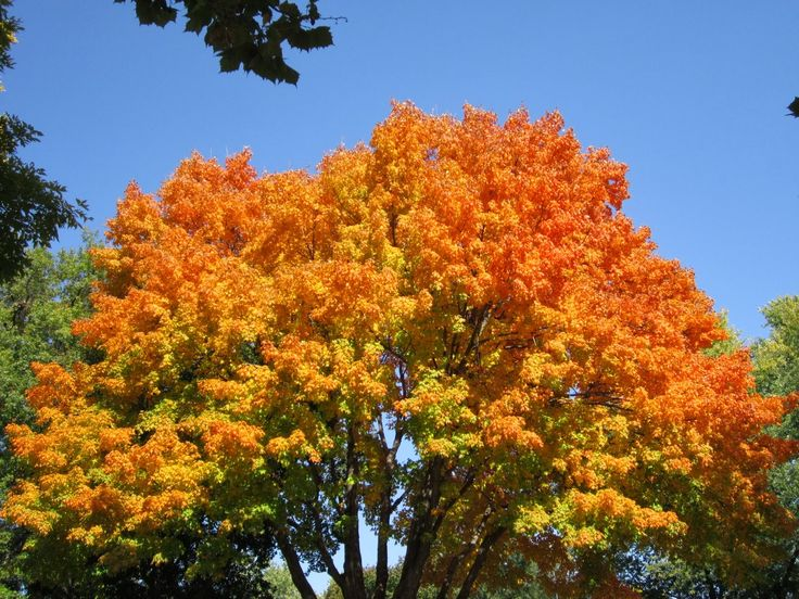 Lovely Fall scenery and a post on English Language. Read more