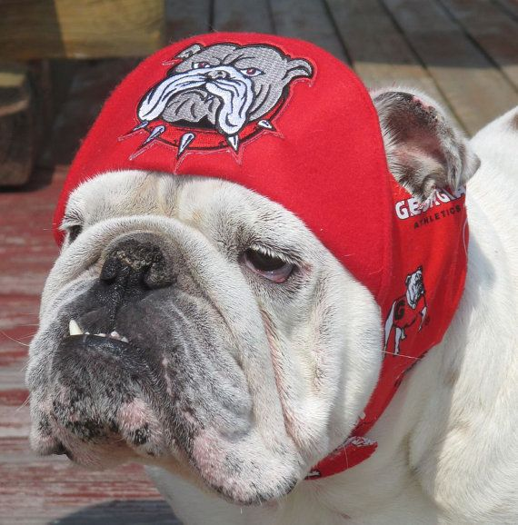 Order UGA hat for English Bulldog- Funny Dog Hat- English ...