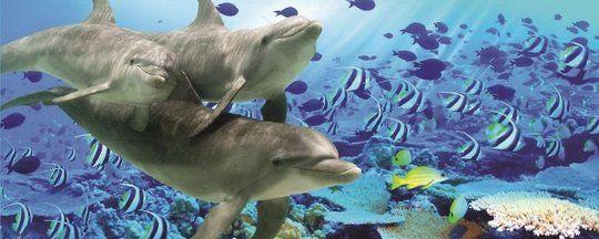 Thema Onder-water / Zee - Muurdeco4kids