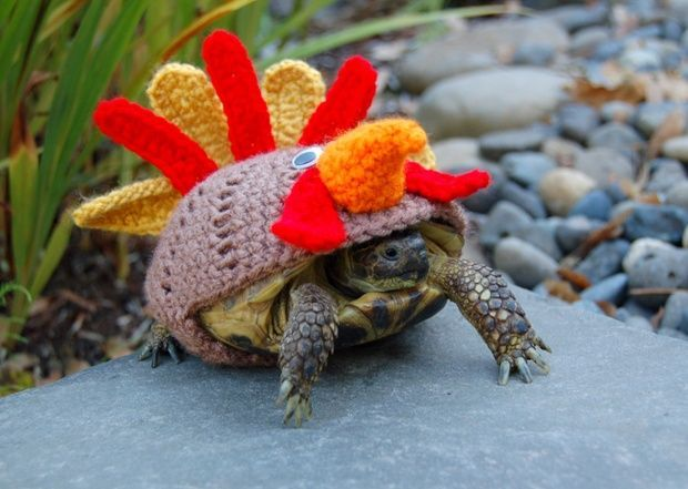 12 Best Images About Clothes For Tortoises On Pinterest