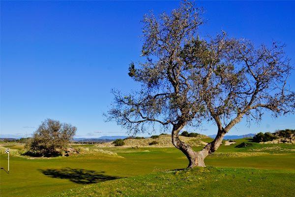 Barnbougle Lost Farm Golf Links, Bridport, north east Tasmania.  Barnbougle Lost FarmGolf Links.  Article and photo by Carol Haberle for www.think-tasmania.com