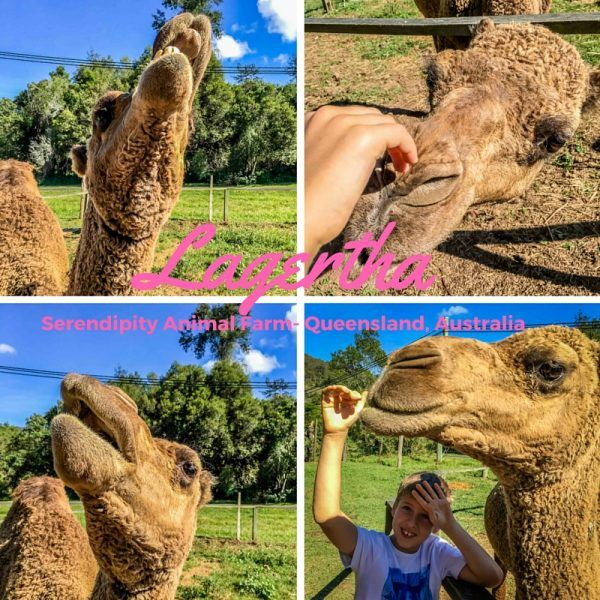 Travel: Serendipity Animal Farm, Brisbane, Australia