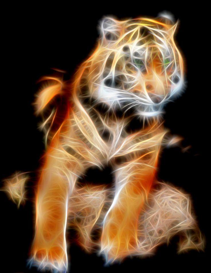 Tiger on Rock by Bob Smerecki