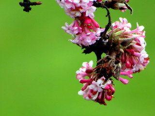 De boom zat zo vol bloesem , de takken hingen op de grond, Foto: buienradar