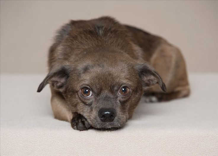 Puppies for adoption in eugene oregon