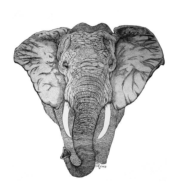 elephant face drawing - photo #20
