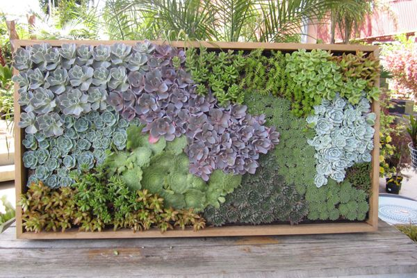Vertical gardens from Flora Grubb. (this is one of my favorites--so colorful & laid out perfectly.)