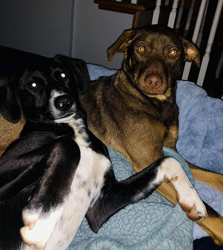 Puppy rescue cleveland ohio
