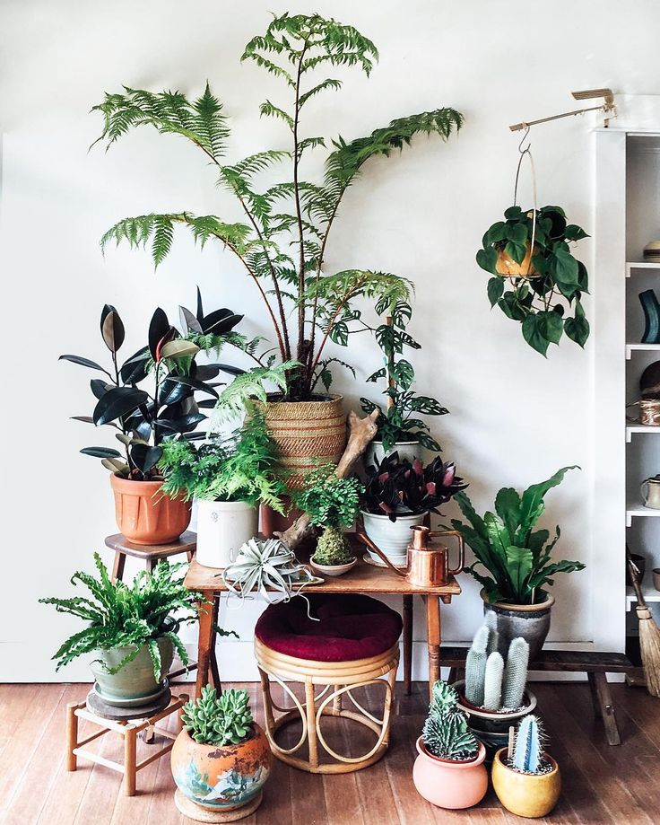 Continuing to marvel at the fast friendship forming between botanicals and vintage over at our @mavencollectpdx pop-up plant shop. Also, crushing way hard on tree ferns right now!