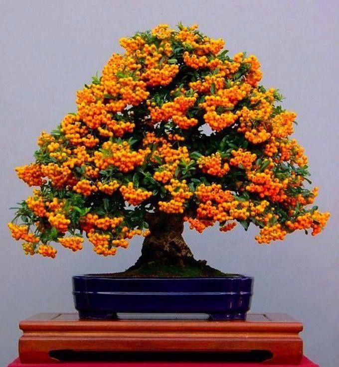Las 25 mejores ideas sobre rboles frutales enanos en for Arboles de flores para jardin