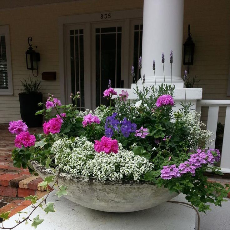 Tampa Container Gardening for indoors and outdoors
