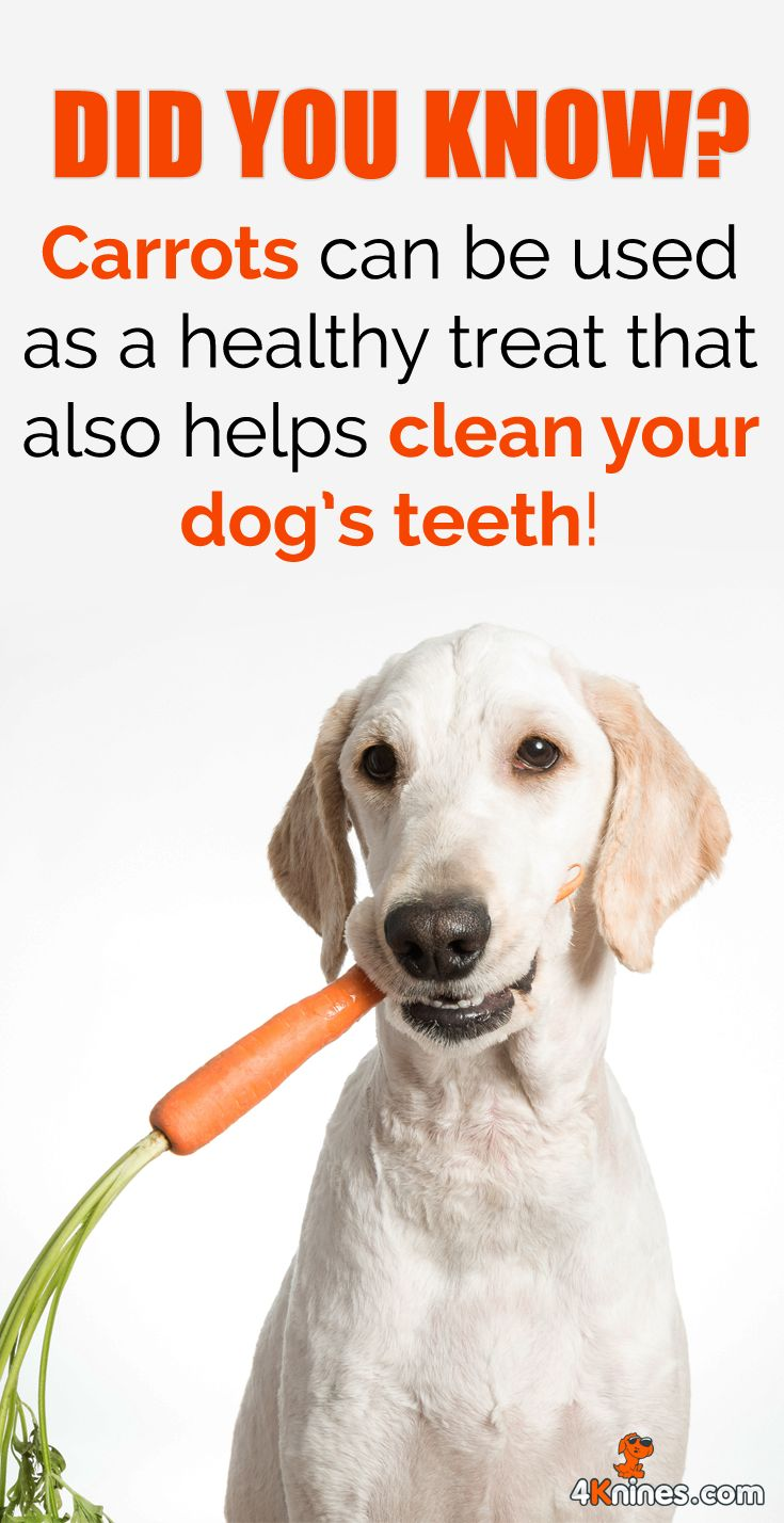 25 Best Ideas About Dog Teeth On Pinterest Do Wolves