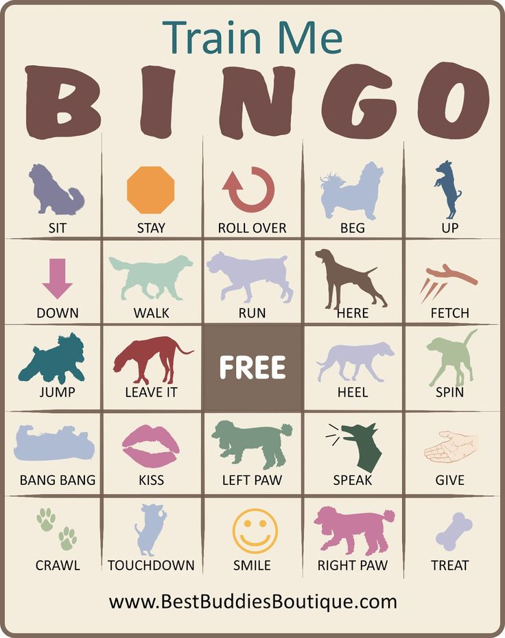 Train Me Bingo! great for kids with dogs. Gets them excited about training, and shows them the progress they've made. FANTASTIC idea, going to use this on my own dog