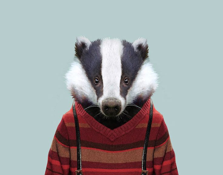 European-Badger---Meles-meles-copia