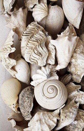 Natural Textures - pale coloured shells with a mix of textured surface patterns; organic inspirations for nature-inspired design