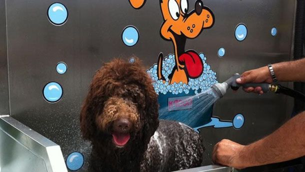 22 best self service dog wash images on pinterest dog wash news the uks first 24 hour self service dog wash solutioingenieria Gallery