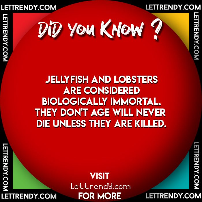 Did You Know Lettrendy Facts Fact Funfacts Lovefacts Life Doyouknow Didyouknow Love Facts Funny Facts Let It Be