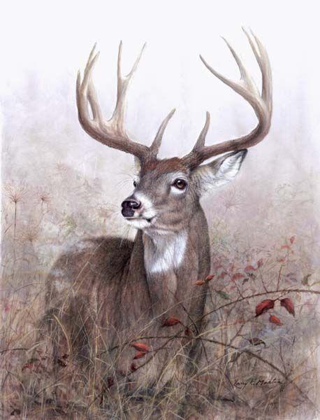 deer drawings - photo #30