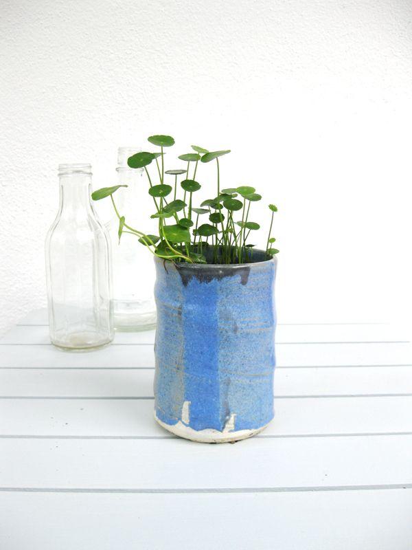 Das Geschenk für Mütter: Jungpflanzen  #pflanzenfreude #pflanzen #plants #mothersday #muttertag