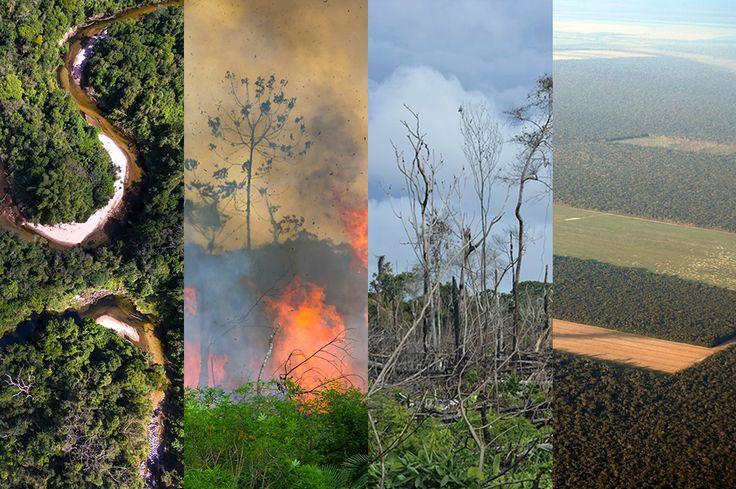 Así es como la deforestación aumenta las sequías en el Amazonas   ELESPECTADOR.COM