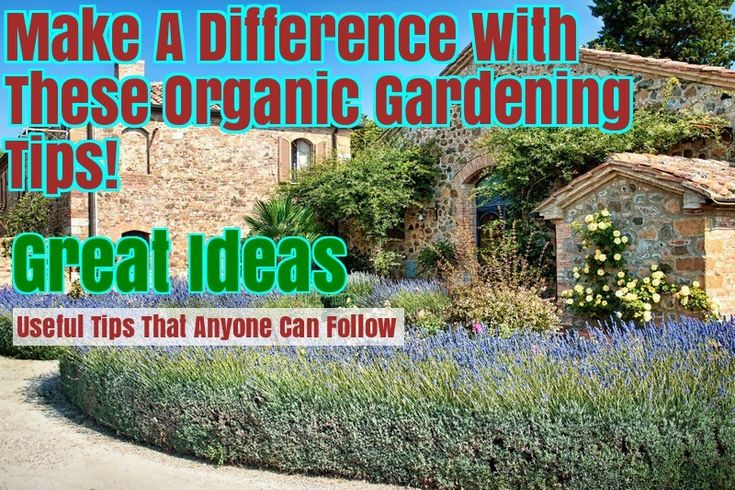 Get Started With Organic Gardening By Using These Suggestions – Gardening Activities