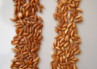 The tricky business of buying farro. -This is good info to know since ...