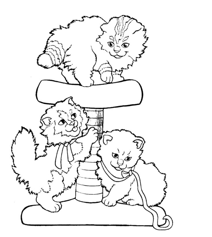 the 25 best coloriage chaton ideas on pinterest coloriage chat