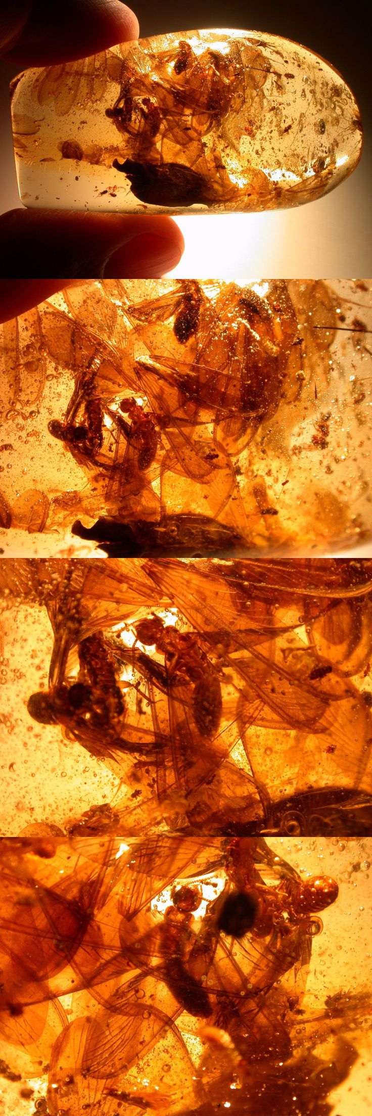 Amber 10191: Mass Of Termite Wings, Winged Termites, Flies, Spider In Colombian Copal Amber -> BUY IT NOW ONLY: $45.0 on eBay!